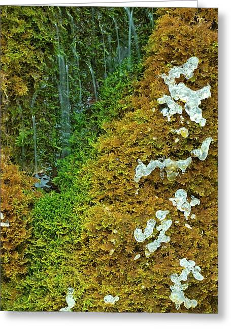 Ice On A Moss Greeting Card