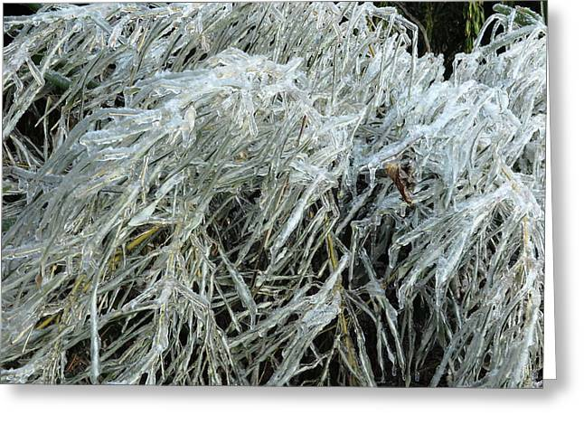 Ice On Bamboo Leaves Greeting Card