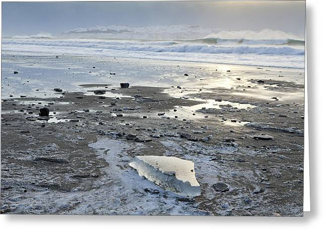 Ice On Fossil Beach Greeting Card by Tim Grams