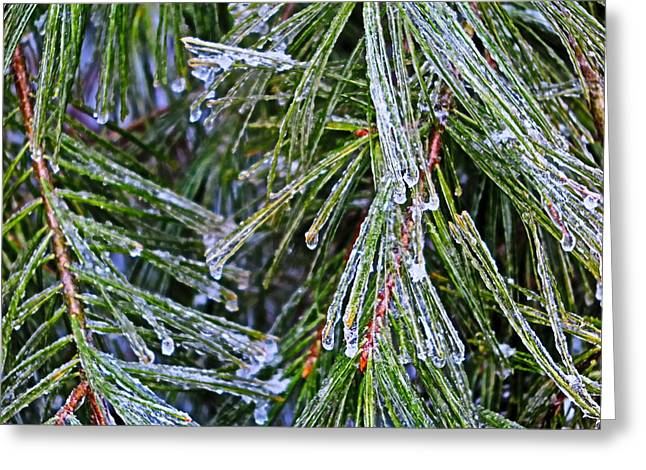 Ice On Pine Needles  Greeting Card