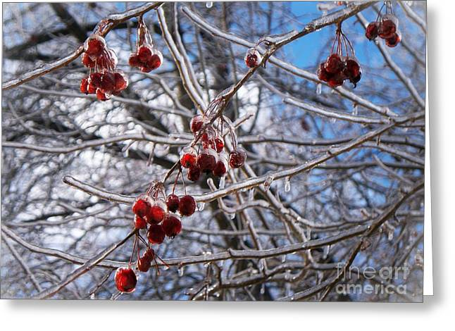 Ice On The Crab-apples Greeting Card by Joy Nichols