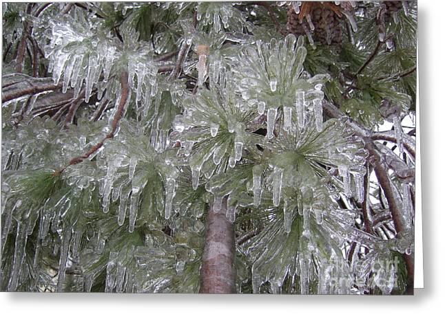Ice Pine Greeting Card by Deborah DeLaBarre