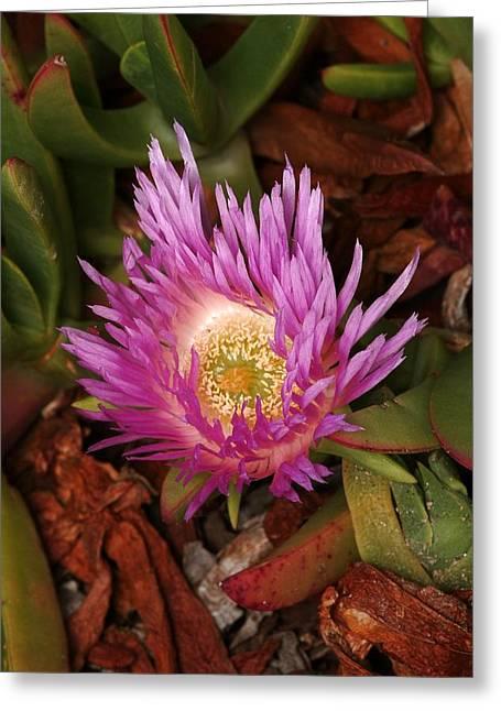 Ice Plant San Diego Greeting Card