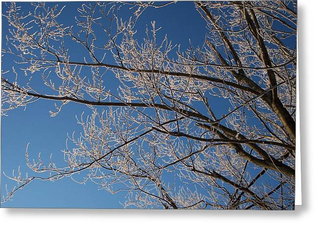 Ice Storm Branches Greeting Card