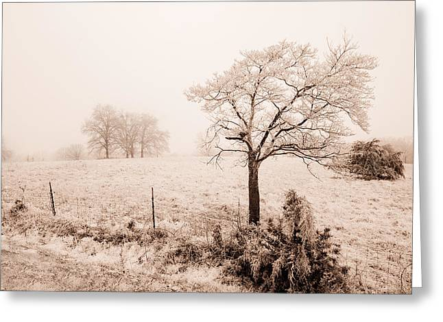 Ice Storm Greeting Card by Brent Craft
