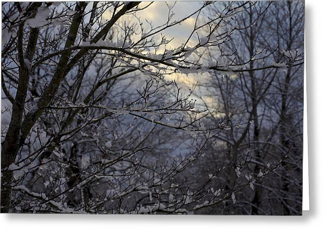 Winter's Embrace Greeting Card by Jane Eleanor Nicholas