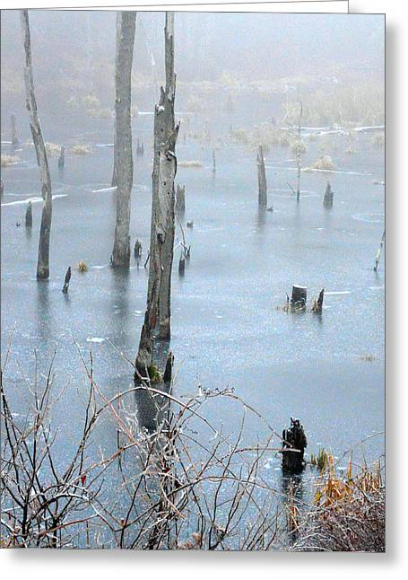 Ice Swamp Greeting Card by James Chesnick