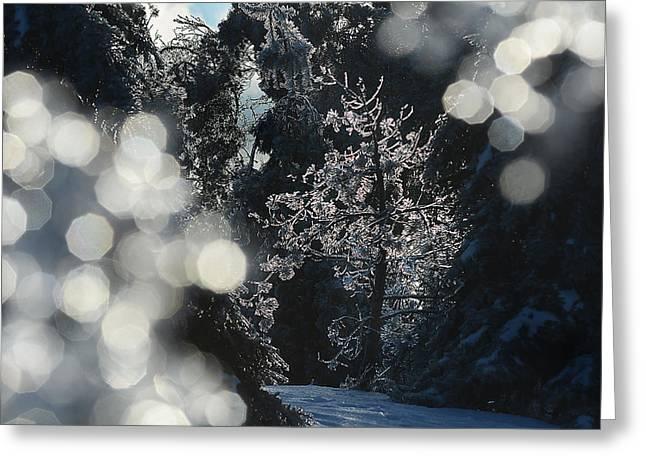 Ice Tree-5074 Greeting Card