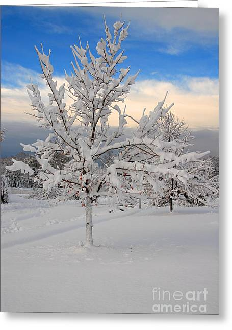 Ice Tree Greeting Card by Fred Cerbini