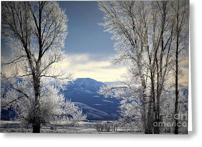 Ice Trees Greeting Card