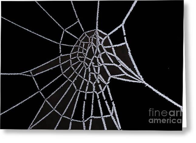 Ice Web Greeting Card by Carol Lynch