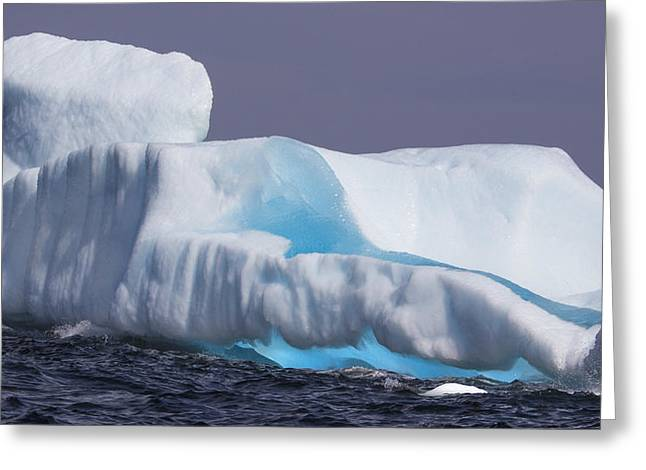 Iceburg 3 Greeting Card by Patsy Zedar