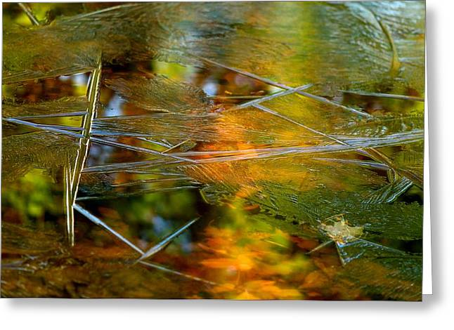 Iced Fall Greeting Card