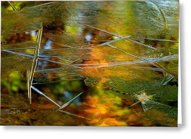 Iced Fall Greeting Card by Simone Ochrym