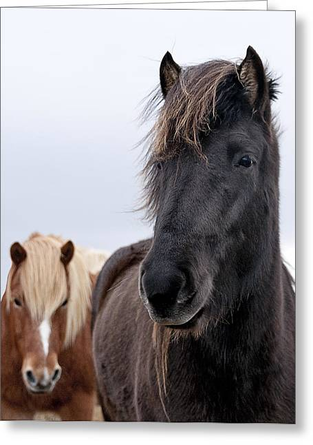Iceland Horses Greeting Card