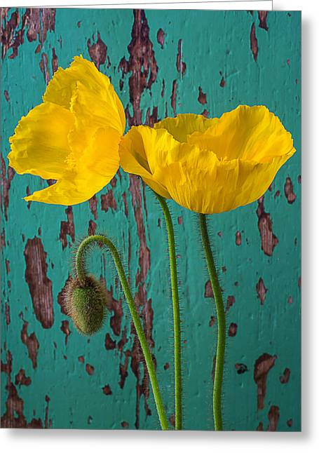 Iceland Poppies Against Green Wall Greeting Card