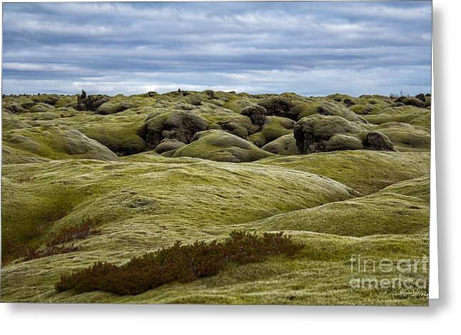 Icelandic Moss Greeting Card by Miso Jovicic