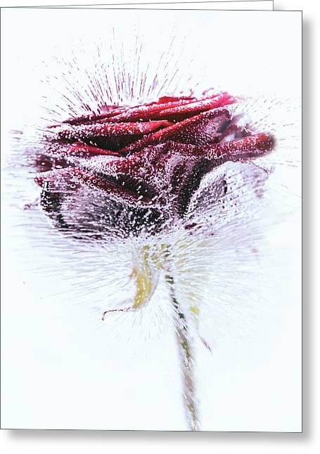 Icerose Greeting Card