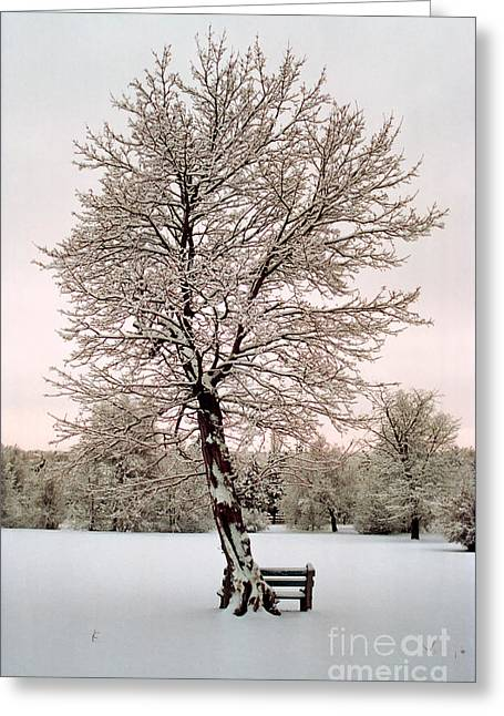 Icetree Greeting Card