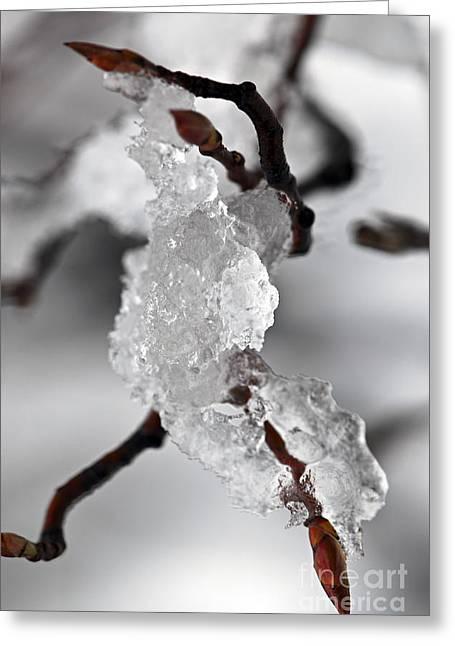Icy Elegance Greeting Card by Elena Elisseeva