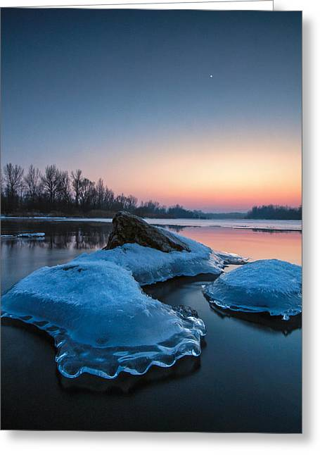 Icy Jellyfish Greeting Card by Davorin Mance