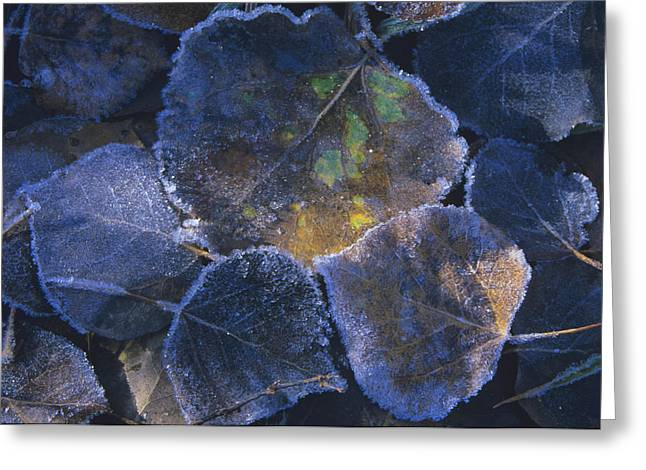 Icy Leaves Greeting Card