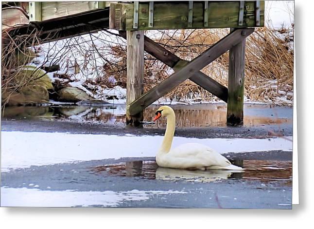 Icy Pond Greeting Card by Janice Drew