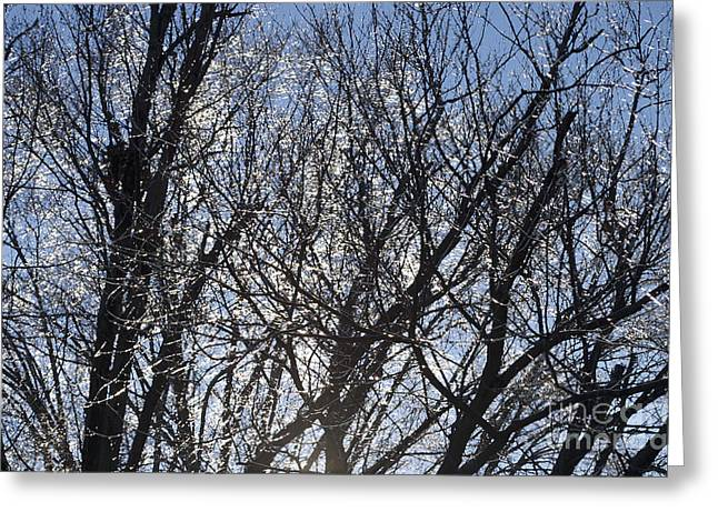 Icy Trees  Greeting Card by Luther   Fine Art