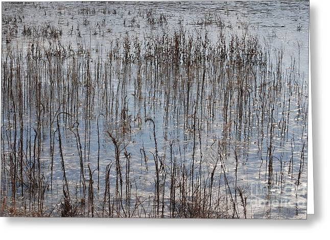 Icy Wetland Greeting Card