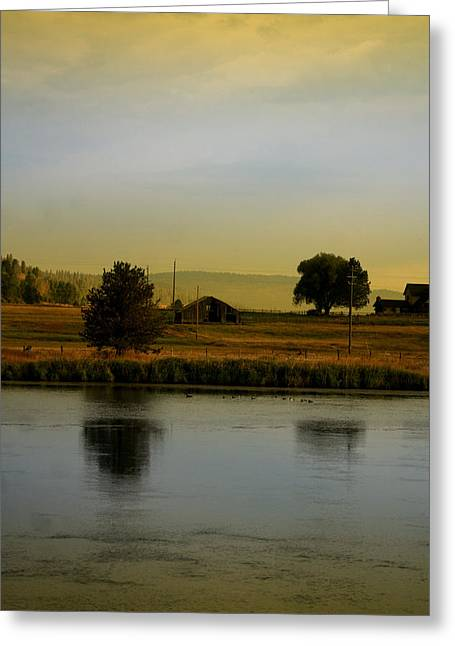 Idaho Tree Reflections  Greeting Card by Mary Gaines