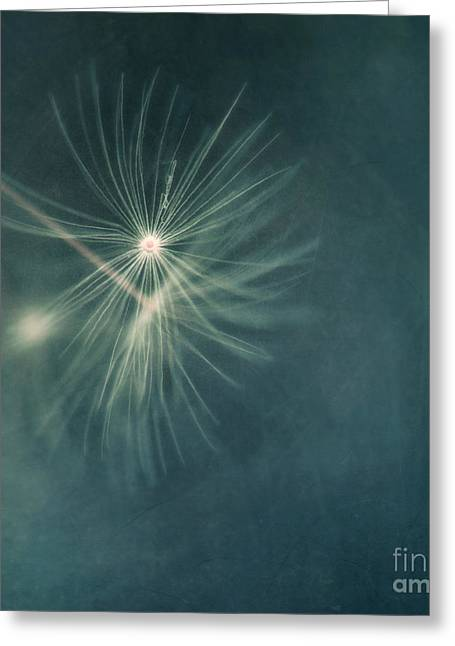If I Had One Wish II Greeting Card by Priska Wettstein