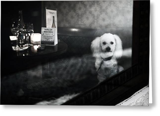 If They Can Only Talk.. Greeting Card by Charlie Photographer