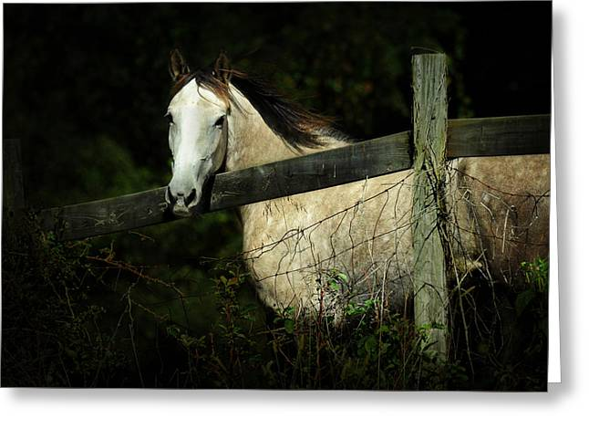 If Wishes Were Horses Greeting Card by Rebecca Sherman
