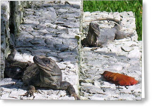 Iguana Bask In The Sun With You Greeting Card by Patti Whitten