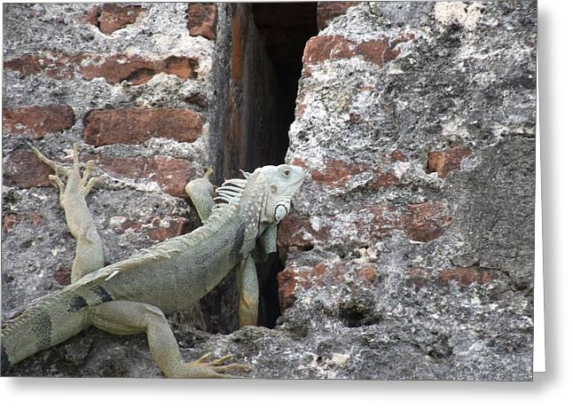 Greeting Card featuring the photograph Iguana by David S Reynolds