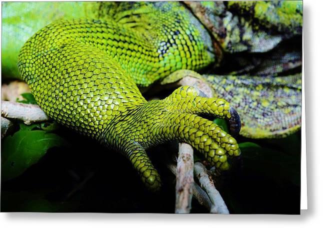 Iguana Details Greeting Card