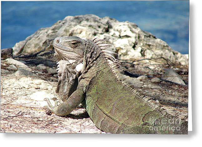 Iguana In The Sun Greeting Card
