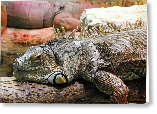 Iguana On A Branch Greeting Card