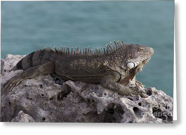 Iguana Greeting Card by Vanessa Devolder