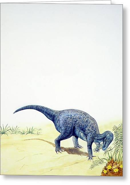 Iguanodon Dinosaur Greeting Card by Deagostini/uig
