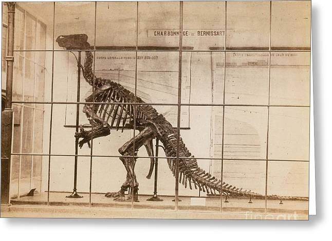Iguanodon Skeleton Mesozoic Dinosaur Greeting Card by Science Source
