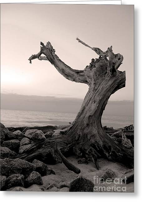 Greeting Card featuring the photograph I'll Find You by Glenda Wright