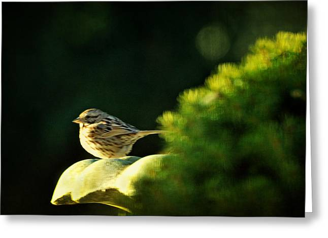 I'll Have To Say I Love You In A Song Sparrow Greeting Card by Rebecca Sherman