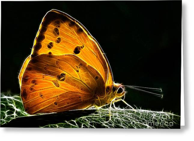 Illuminated Butterfly Greeting Card by Alice Cahill