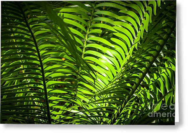 Illuminated Jungle Fern Greeting Card