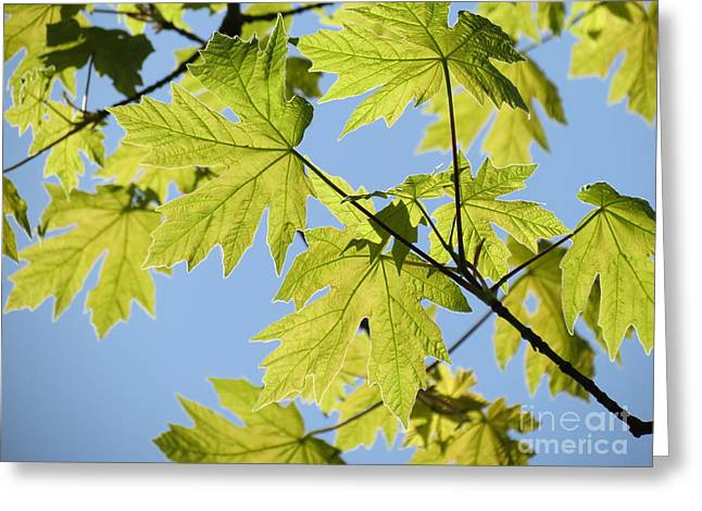 Illuminated Leaves Greeting Card by Gayle Swigart