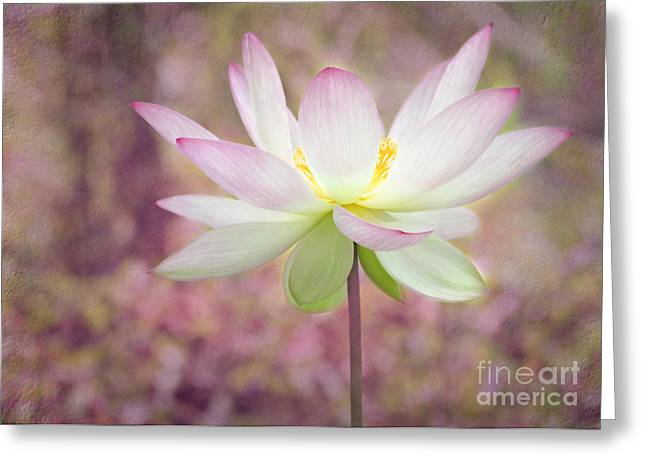 Illuminated Lotus Greeting Card by Sabrina L Ryan