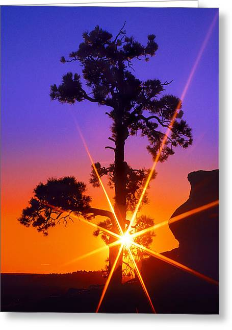 Illuminated Needles  Greeting Card