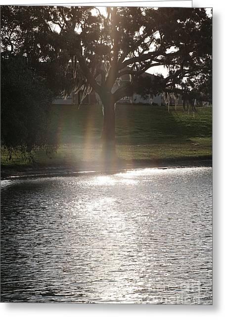 Illuminated Tree Greeting Card