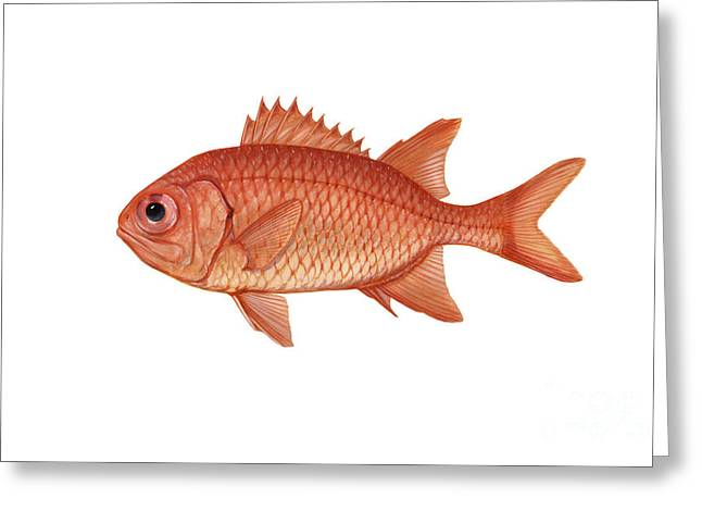 Illustration Of A Brick Soldierfish Greeting Card by Carlyn Iverson
